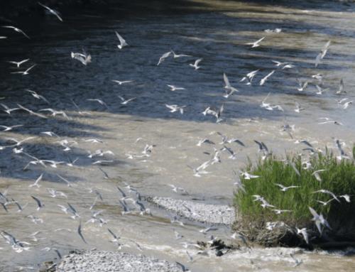 Un double arrêté de protection de biotope
